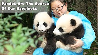 Pandas Are Angels Who Spread Love And Happiness | iPanda