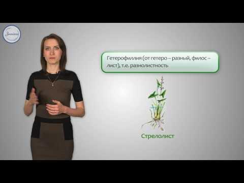 Приспособление растений к условиям среды: влажность