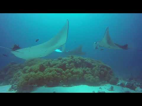 Mahi Rock (Manta Cleaning station near Dhangethi)
