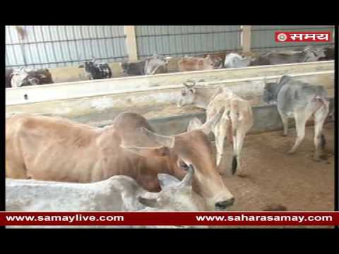 Bill passed in Gujarat Assembly to stop cow slaughter