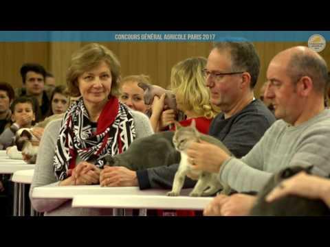 Voir la vidéo : Ring Canins du 02 mars 2017, partie 2