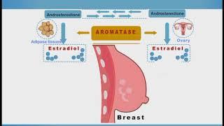 Breast Cancer Chemotherapy animation: Tamoxifen