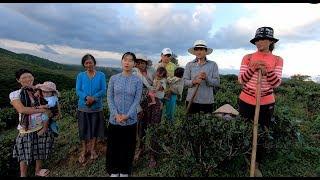 Đem Xà Bách lên núi đào Dế - Hương vị đồng quê - Bến Tre - Miền Tây