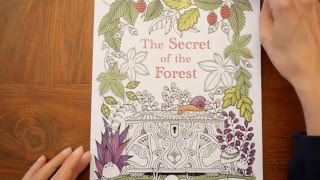Colouring Book The Secret Of Forest