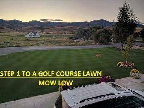 STEP 1 to Golf Course looking lawn
