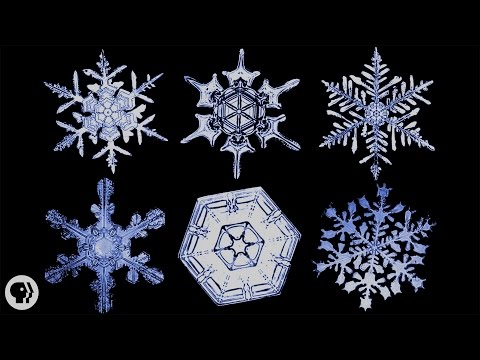 Is Every Snowflake Actually Unique?