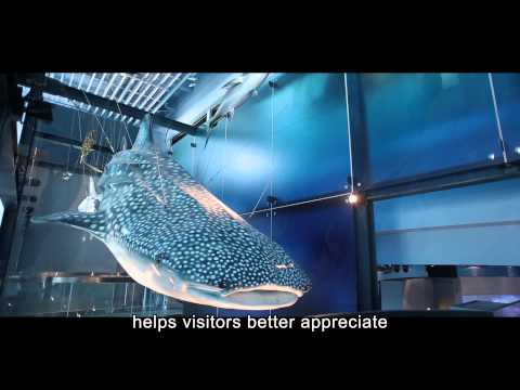 National Museum of Marine Science and Technology - Marine Environment Gallery海洋環境廳