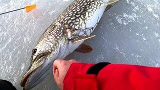 Зимния рыбалка щука