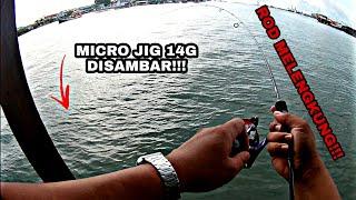 Unlock 2 new species on micro jig!!! || ultralight fishing