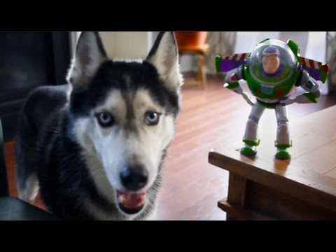 Mishka Goes To Infinity and Beyond!