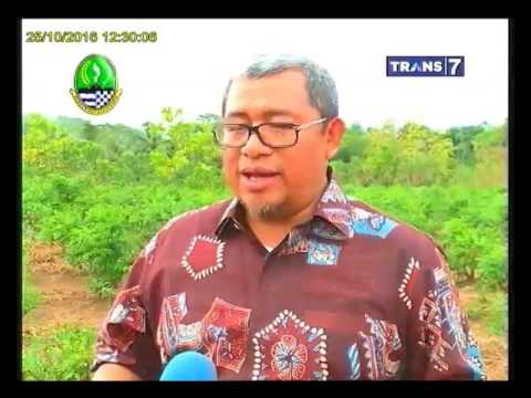 Video Tanaman Indigofera