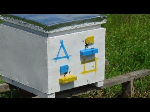Манипуляция лётной пчелы на любительском точке!!!