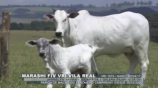 Marashi fiv vri vila real