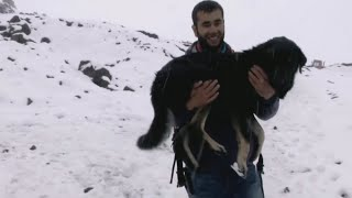 Кабардино- Балкария. Собака заблудилась на Эльбрусе. История спасения