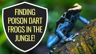 Poison Dart Frog Adventure