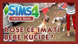Cats & Dogs - SIMS 4 - ROSE ĆE IMATI BEBE KUČIĆE - #12