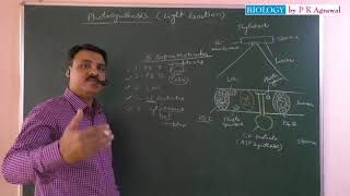 Photosynthesis And Light Reaction First Part