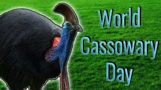 World Cassowary Day!