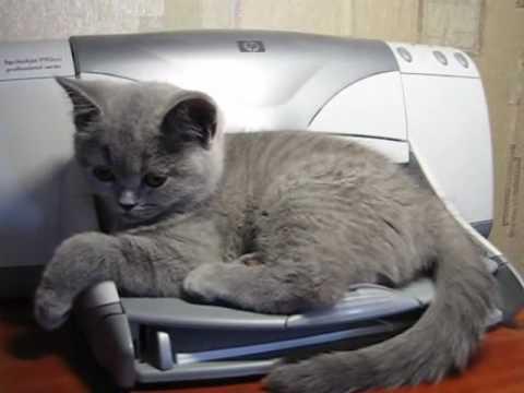 החתול והמדפסת - קרב ראש בראש!