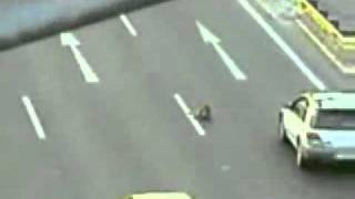 Смотреть онлайн Собака спасает сбитую собаку на дороге