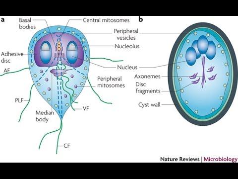 Áttekintés a paraziták kezeléséről a testben
