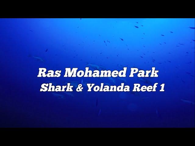 Parc RAS MOHAMMED shark & yolanda reef - scuba diving -   SpiritDiver HD