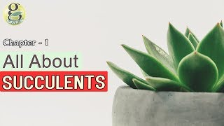 CACTI AND SUCCULENTS for beginners - INTRODUCTION | Difference between cactus and succulents