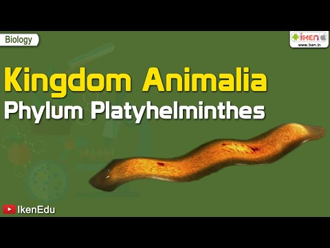 Embranchement des platyhelminthes