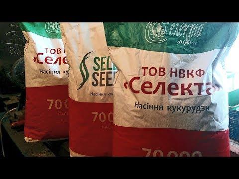 Семена кукурузы: Полтава, Купава, Кредо. Купить семена кукурузы в Украине.