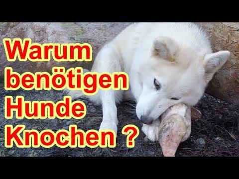Hundefutter - Knochen sind wichtig für den Hund / Nature Trails