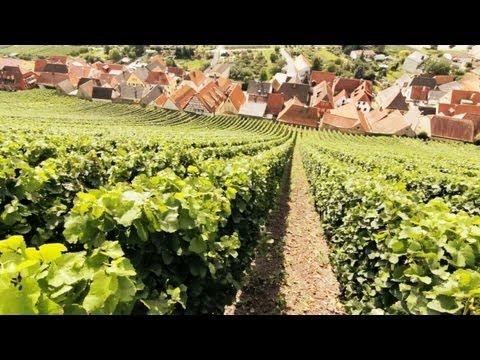 Schaumwein, Sekt, Champagner und Prosecco - Die Weinexperten