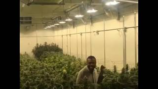 Comedian Lil' Duval does Creep Dog in weed warehouse