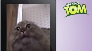 Talking Tom VS NoNoNoNo Cat