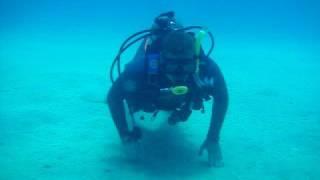 Hermit the Crab