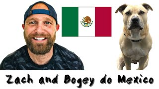 Can You Bring Your Dog to Mexico?  (Mexico Travel Vlog)