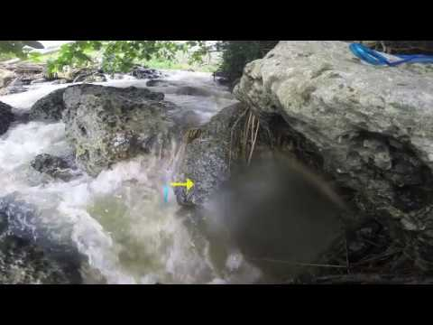 Diurnal feeding behavior of the American Eel Anguilla rostrata