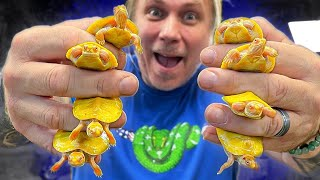 UNBOXING 15 BABY ALBINO TURTLES for MY REPTILE ZOO!! | BRIAN BARCZYK