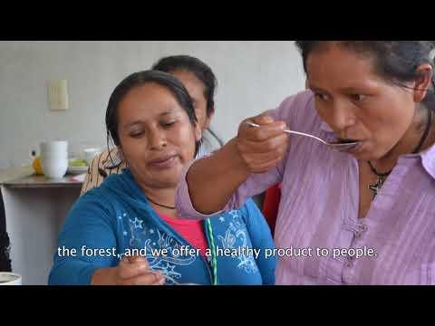 El Triunfo Biosphere Reserve implements Sustainable Development Goals (Mexico)