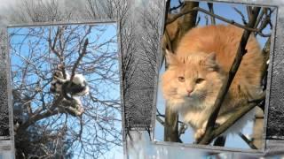MARCH_1_МАРТ-День котов