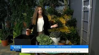 Mirëmëngjesi Kosovë - Kronikë Kujdesi ndaj Luleve - Lakra dekorative 17.10.2020