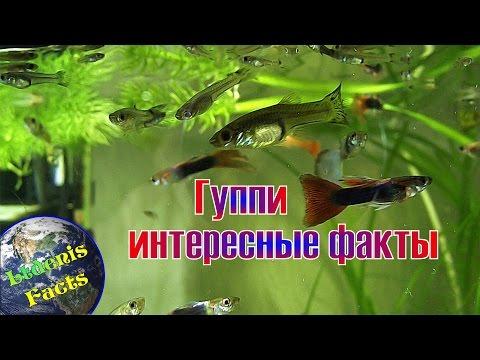 Sesso a Tomsk 14 anni