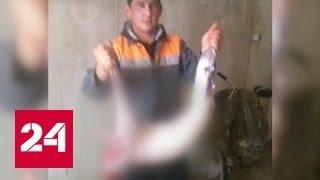 Мясо бродячих собак продавали под видом баранины