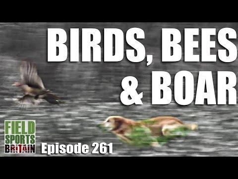 Fieldsports Britain – Birds, Bees & Boar