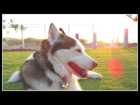New Dog Park Silverado Ranch Park