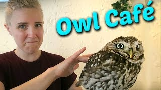 I Had Coffee with an Owl! - Video Youtube
