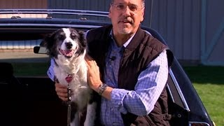 Smarter Driver: Tips on keeping your dog safe in the car