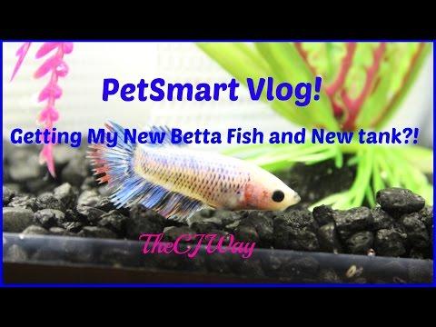 Petsmart Vlog: Getting My New Betta Fish and New Tank?!!