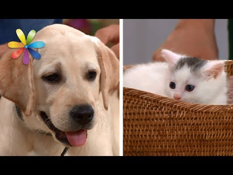 Кого выбрать в домашние питомцы: собаку или кота? – Все буде добре. Выпуск 1023 от 24.05.17