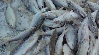 Рыбалка на голубом заливе казань