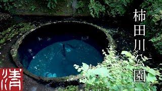 自然浴60分柿田川公園/静岡県駿東郡清水町-NatureSounds60min